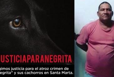 Capturan al 'Carnicero' por cruel asesinato de una perra en Santa Marta