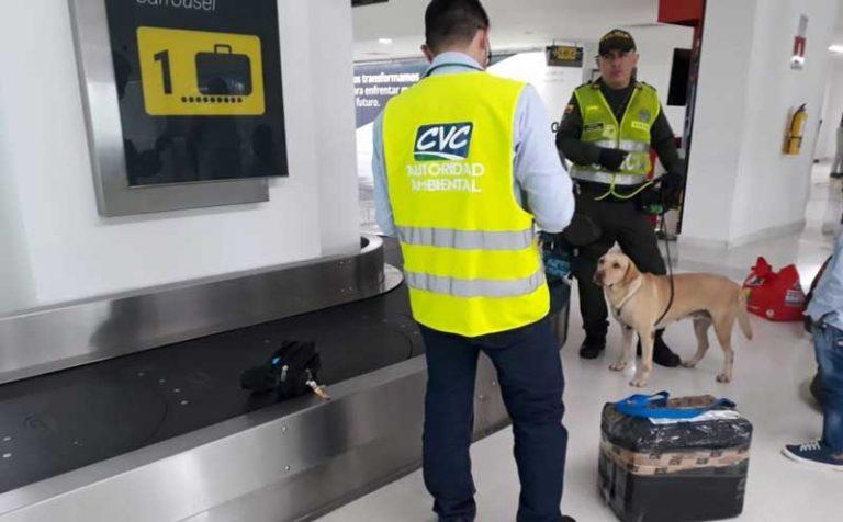 Control de trafico de flora y fauna en el aeropuerto Alfonso Bonilla Aragón