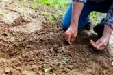 Realizan siembra en vereda de Yumbo tras incendio que consumió 65 hectáreas