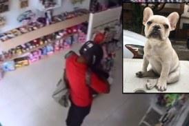 Comerciante de Cali denunció que ladrón robó objetos de valor y a su mascota en su local