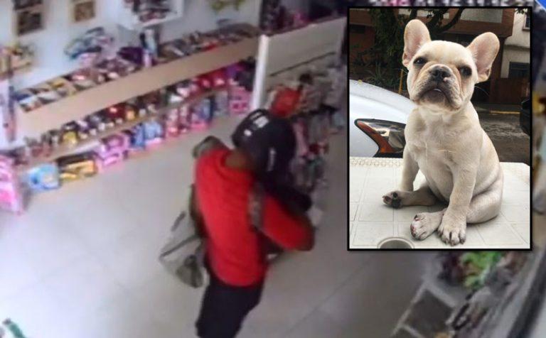 Comerciante denunció que ladrón robó objetos de valor y a su mascota en su local