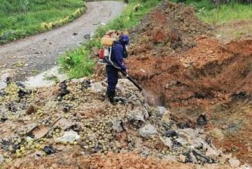 Autoridades en alerta para evitar que peras contaminadas se vendan en el Valle