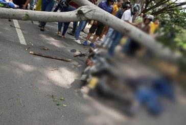 Identifican a motociclistas que murieron tras caída de árbol en recta Palmira – Cali