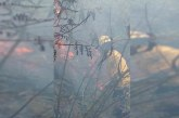 Incendio forestal en el corregimiento La Castilla fue controlado por los Bomberos