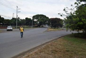 Al menos 2.500 árboles serán sembrados por obras de compensación en vía Cali-Candelaria