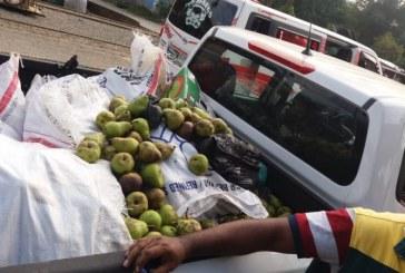 Alerta por peras en mal estado que fueron desenterradas y comercializadas en Buenaventura