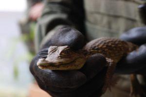 Operativos buscan frenar comercialización de fauna y flora clandestina en Valle