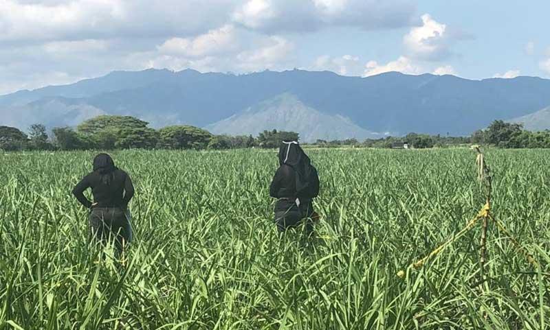 Identifican restos de menor encontrada en ingenio azucarero en Guacarí, Valle