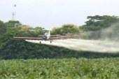 Se hunde proyecto que buscaba prohibir el uso de glifosato en Colombia