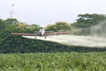 Gobierno Nacional pide que se permita aspersión de cultivos ilícitos con Glifosato