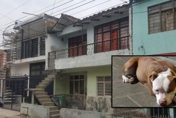 Niño de cinco años fue atacado por un perro Pitbull al caer de un segundo piso