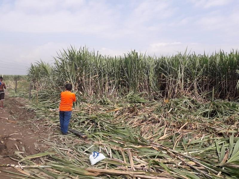 Cerca de 80 familias intentan invadir cañaduzal en sector Villa Luz, oriente de Cali