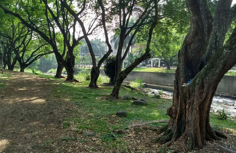 CVC siembra 22.000 árboles de varias especies en diferentes sitios de Cali