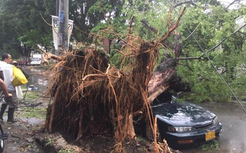 Dagma entregó balance sobre estado de árboles en Cali a propósito de las lluvias