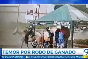 Habitantes de Bitaco, Valle, están denunciando robo de ganado y caballos de fincas