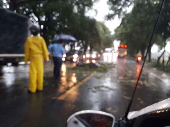 Caída de árbol sobre la vía Palmira – Amaime dejó 3 motociclistas lesionados