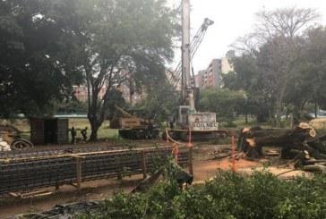Autoridades ambientales dicen que se sembrarán 3.170 árboles por obras del sur de Cali