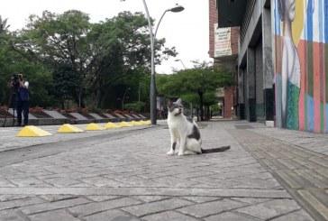 Vecinos al Bulevar del Río denuncian que están envenenando a los gatos del lugar