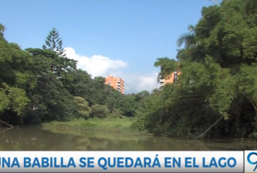 Confirman que de las 3 babillas de Ciudad Jardín, una seguirá viviendo en el humedal