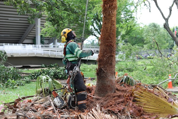Cerca de 20.000 árboles han sido intervenidos en el primer semestre del año en Cali