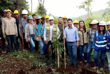 Proyecto de restauración ecológica en Pance sembrará 7.830 árboles en 27 hectáreas
