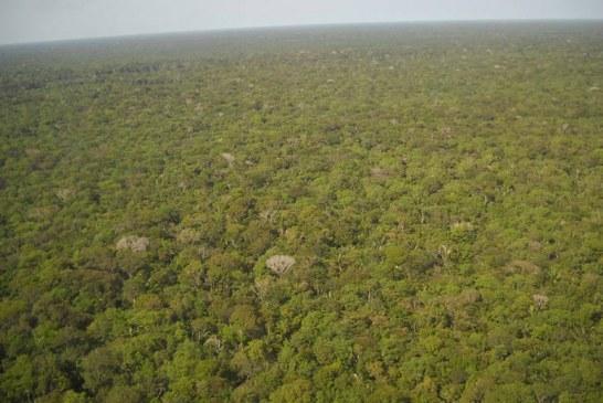Colombia trabaja para evitar que incendios en cuenca del Amazonas lleguen a su territorio