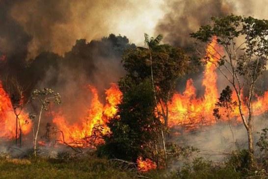 Presidente de Colombia ofrece apoyo para mitigar incendios en la Amazonía