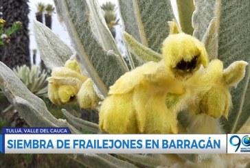 Ejército y CVC sembraron frailejones en páramo de Barragán, Tuluá
