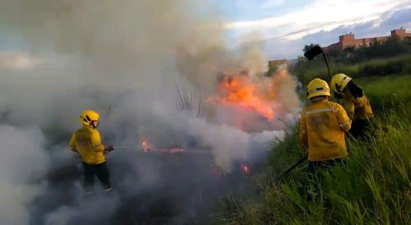 Vegetación y fauna afectada tras cuatro incendios forestales registrados en Cali
