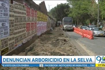 Habitantes de La Selva denuncian arboricidio en donde antes funcionaba un colegio