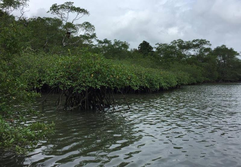 Firman acuerdo para la protección de 900 hectáreas de manglar en Bahía Málaga