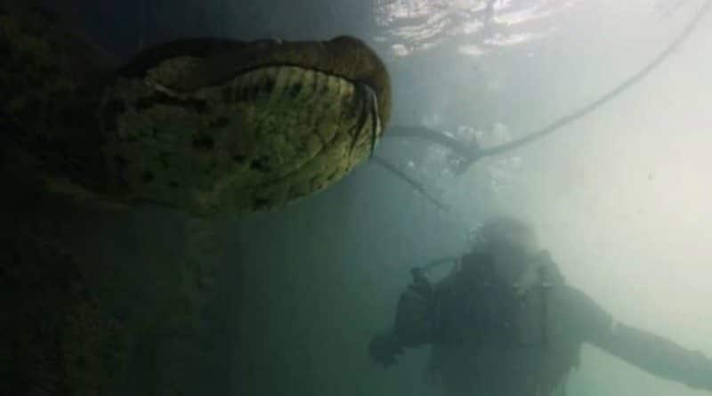 Increíbles imágenes de dos buzos que encontraron una anaconda en el río Formoso en Brasil