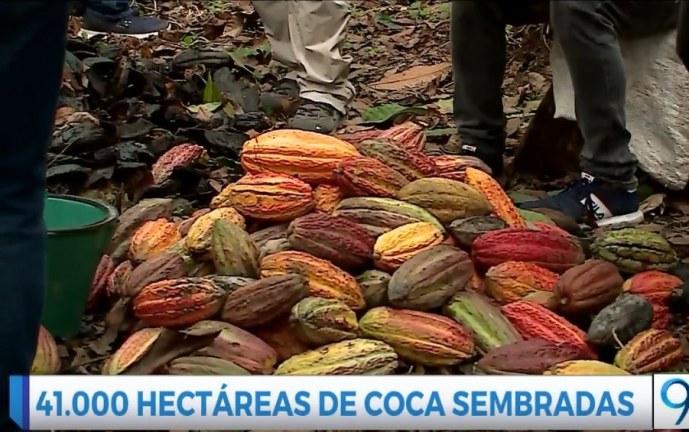 Campesinos de Tumaco, Nariño encontraron en el Cacao una forma de sustento