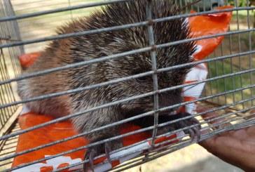 En varios operativos, CVC rescató diferentes especies de fauna silvestre en Valle