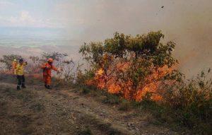 'Cerros más verdes', la apuesta de la CVC que busca recuperar zonas afectadas por incendios en el Valle