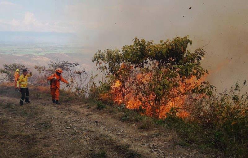 Programa 'Cerros Más Verdes' pretende reforestar zonas afectadas por incendios forestales en Valle