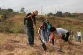Alcaldía de Cali invita a sumarse a la siembra de árboles el próximo sábado