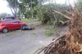 Caída de árbol sobre dos vehículos dejó herida a una persona en el oriente de Cali