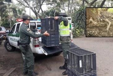 Incautan dos avestruces en Terminal de Transporte de Cali que serían trasladadas a la Guajira