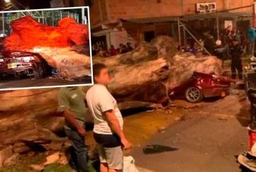 Tragedia: identifican a hombre que murió aplastado por un árbol en el norte de Cali