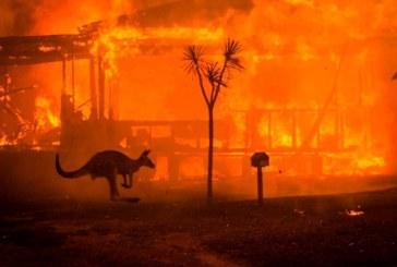 ¡Tragedia! Más de 1.000 millones de animales murieron en incendios forestales en Australia