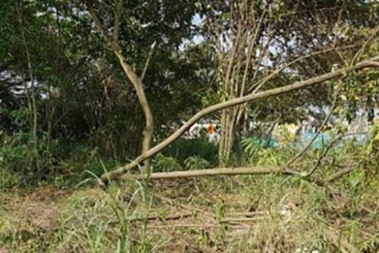 Suspenden firma de ingenieros por talar 27 árboles en lote de Bochalema
