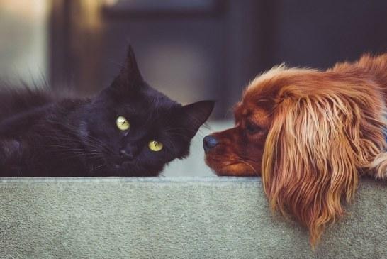 OMS reitera que mascotas de hogar NO transmiten coronavirus a humanos