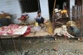 China negocia con la OMS sobre viaje para investigar el origen del virus