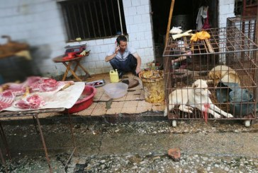 Lanzan en China aplicación móvil para denunciar la venta de fauna silvestre