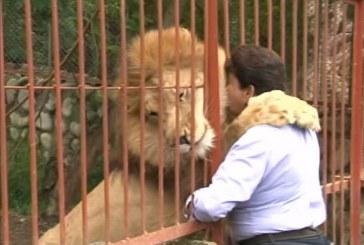 Dictamen forense de la Fiscalía reveló las causas por las cuales murió el león 'Jupiter'