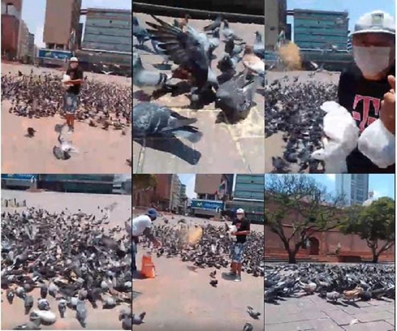 Video: en plena cuarentena, caleños se ocupan de la alimentación de las palomas de la ciudad