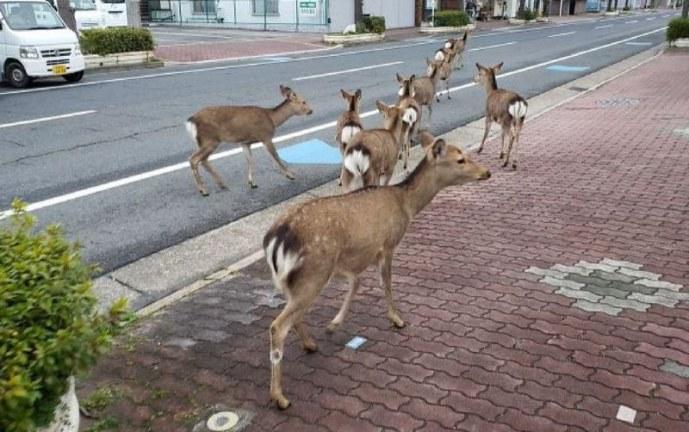 Los animales se toman las calles