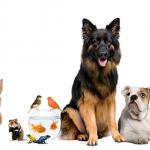 Campaña para garantizar alimentos a animales de la calle en cuarentena