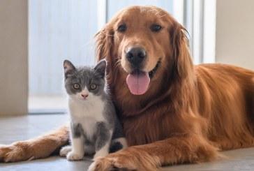 Rusia lanzó la primera vacuna anticovid para animales en el mundo